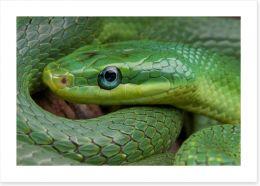 Emerald snake