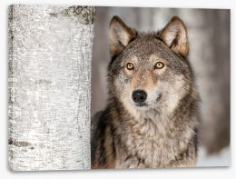 Grey wolf in the snow Stretched Canvas 55193652