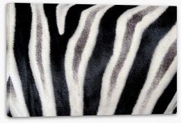 Zebra stripes Stretched Canvas 55199128