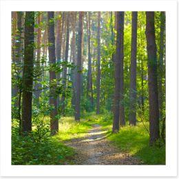 Spring forest sunlight