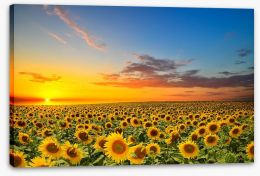 Meadows Stretched Canvas 56916430