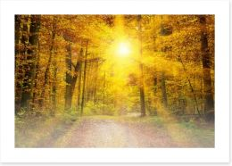 Forests Art Print 56938674