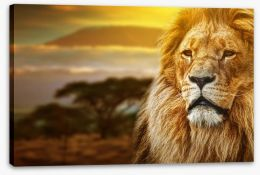 Mount Kilimanjaro lion Stretched Canvas 57644661
