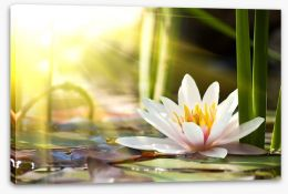 Sunbeam on lotus Stretched Canvas 58356953