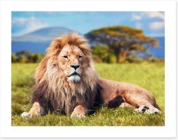 Lion on savannah grass, Kenya