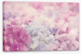 Pink hydrangea haze Stretched Canvas 58642487