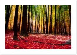 Autumn forest with golden light Art Print 58997773
