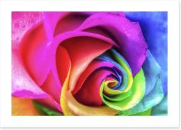 Vibrant rainbow rose Art Print 59184725