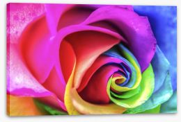 Vibrant rainbow rose Stretched Canvas 59184725