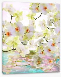Japanese orchid reflections Stretched Canvas 59983337