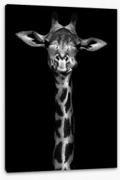 Giraffe in black and white Stretched Canvas 60752164