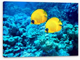 Yellow coral fish Stretched Canvas 60962801