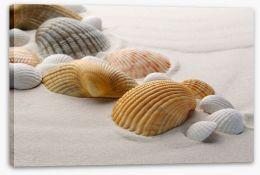Shells on the sand Stretched Canvas 61327381