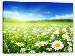 Daisy meadow Stretched Canvas 62087928