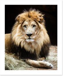 The lion king Art Print 62092718