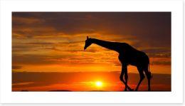 Sunset giraffe silhouette Art Print 62291658