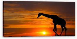 Sunset giraffe silhouette Stretched Canvas 62291658