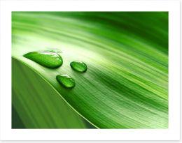 Droplets Art Print 62557713