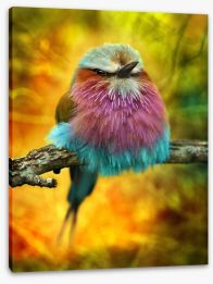 Lilac breasted roller bird Stretched Canvas 62909322
