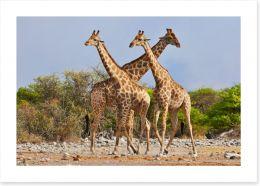 Etosha National Park 63129442