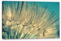 Dandelion flowers Stretched Canvas 63240565