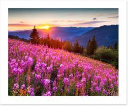 Sunrise across the meadow