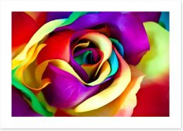 Spectacular rainbow rose