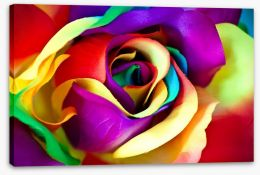 Spectacular rainbow rose Stretched Canvas 64237131