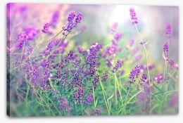 Soft focus lavender Stretched Canvas 64280117