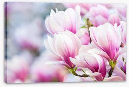 Delicate magnolia Stretched Canvas 64511919
