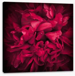 Peony petals Stretched Canvas 65021905