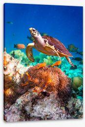 Fish / Aquatic Stretched Canvas 67120582