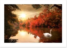 Autumn swan Art Print 68775612