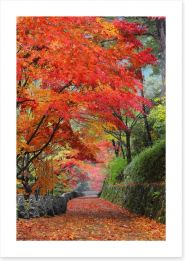Maple promenade