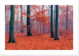 Misty Autumn forest