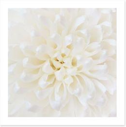 Perfect Chrysanthemum Art Print 71308897