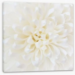 Perfect Chrysanthemum Stretched Canvas 71308897