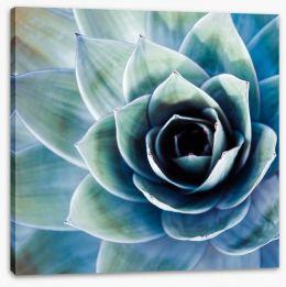 Succulent Stretched Canvas 72072431