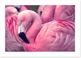 Birds Art Print 73127660