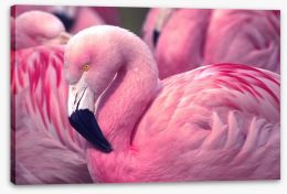 Birds Stretched Canvas 73127660
