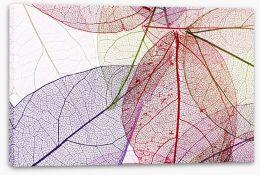 Skeleton leaves Stretched Canvas 73398624