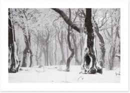 Glacé forest Art Print 78577026
