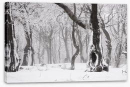 Glacé forest Stretched Canvas 78577026