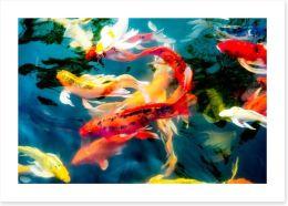 Koi fish in pond Art Print 78802903