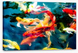 Koi fish in pond Stretched Canvas 78802903
