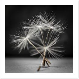 Dandelion dance Art Print 79359123