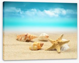 Starfish and seashells Stretched Canvas 80083100