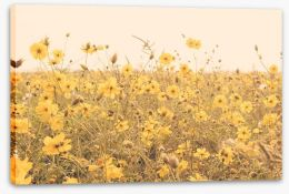 Yellow cosmos meadow Stretched Canvas 80553348