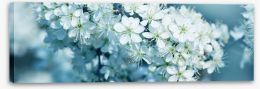 Fresh blossom panorama Stretched Canvas 81205012
