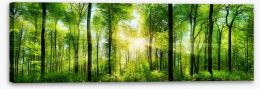 Forests Stretched Canvas 82972458